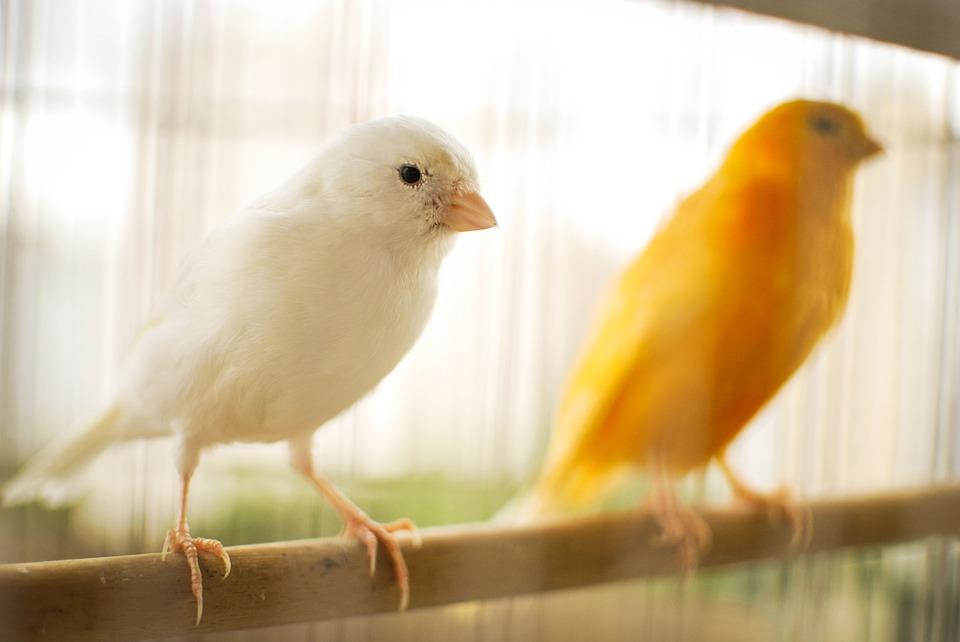 vitaminas para aves