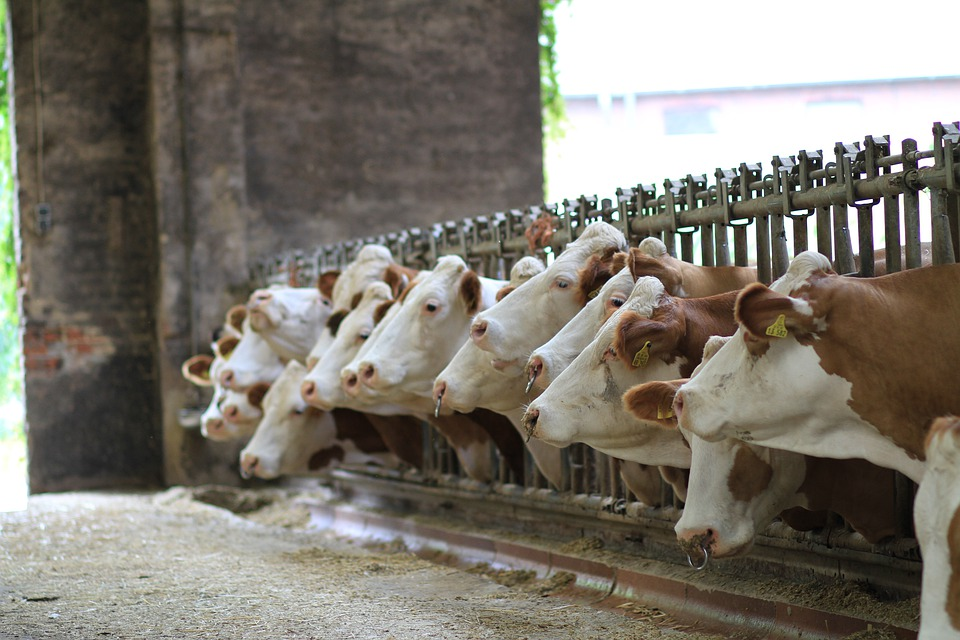 Cereales para el ganado