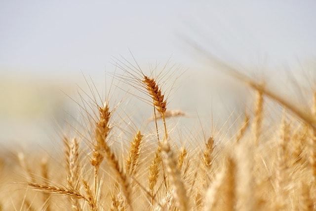 propiedades de la harina de avena